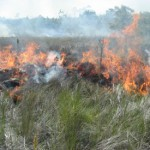 Prescribed burn used for habitat management (2007).