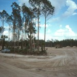 Native tree clusters were protected during campus construction (1996).