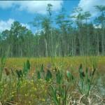 Wetland (1998)