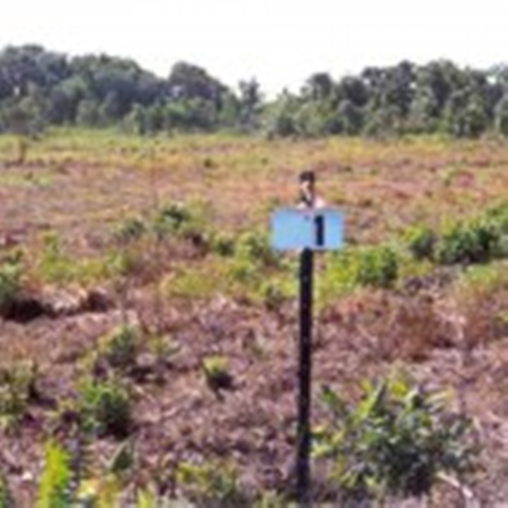 HP1-Pasture-prior-to-restoration-to-hydric-pine-flatwoods-2002