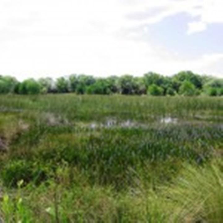 Marsh3-Freshwater-marsh-restoration-area-2007