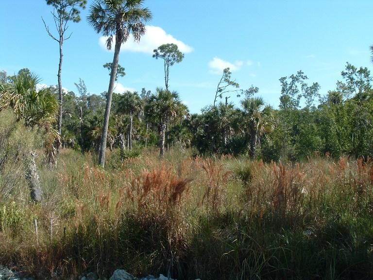 Wetland Preserve